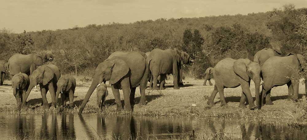Hunting Safari Bookings