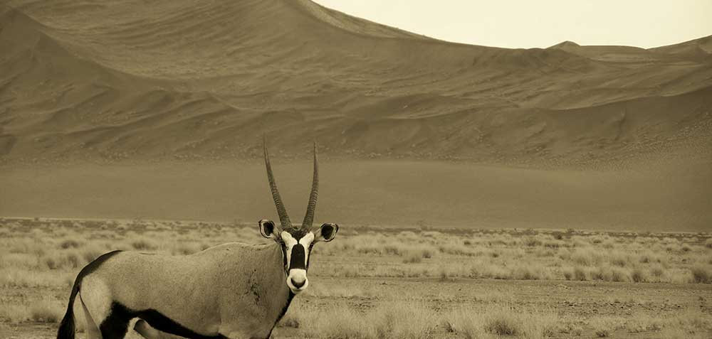 Available Hunting Packages South Africa