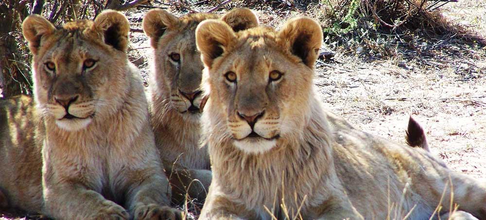 Big Five African Hunting Safari
