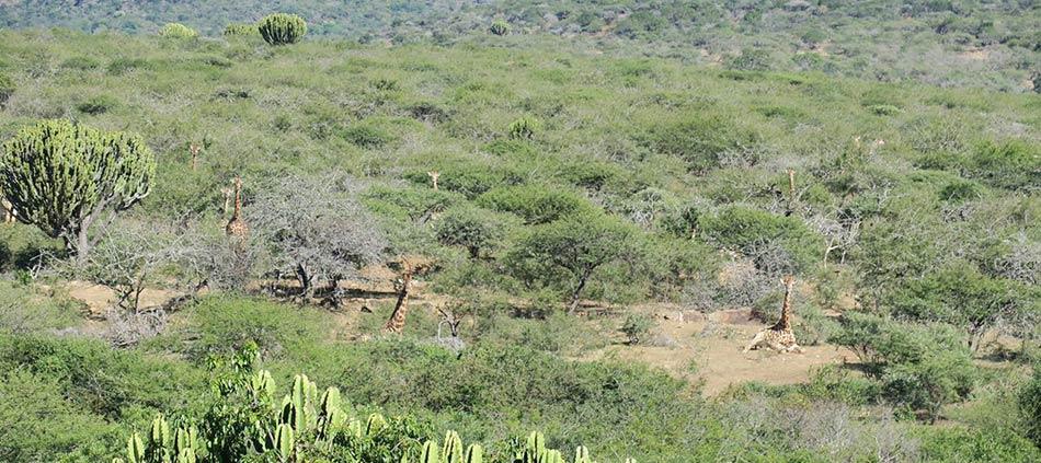 Kwazulu Natal Free State Hunting Package